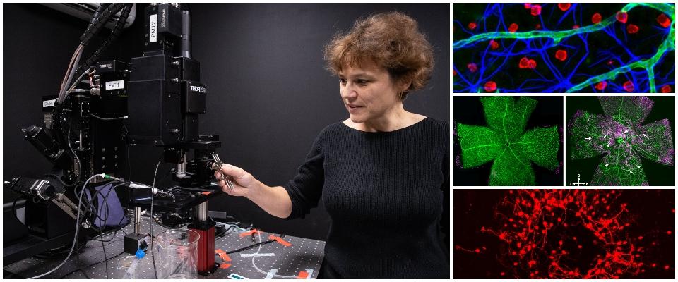 Dr. Elena Ivanova at microscope